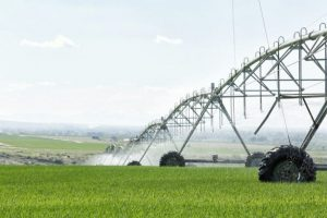 Quel fournisseur d'électricité pour mon exploitation agricole ?